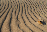 A lone leaf rests among wind blown sand along Lake Michigan near St. Joseph, Mich., during a recent fall day.
