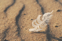 A gull feather is caught in the blowing sand along Lake Michigan in St. Joseph.